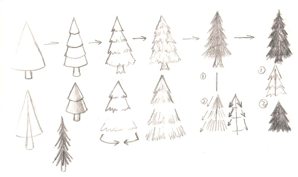 What Kind Of Trees Are Christmas Trees