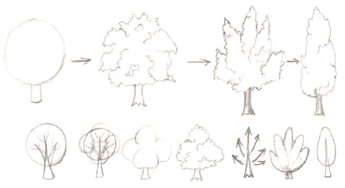 how to draw a bush step by step