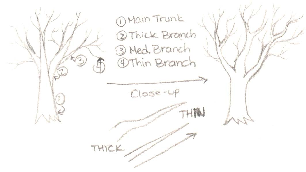 how to draw tree branches